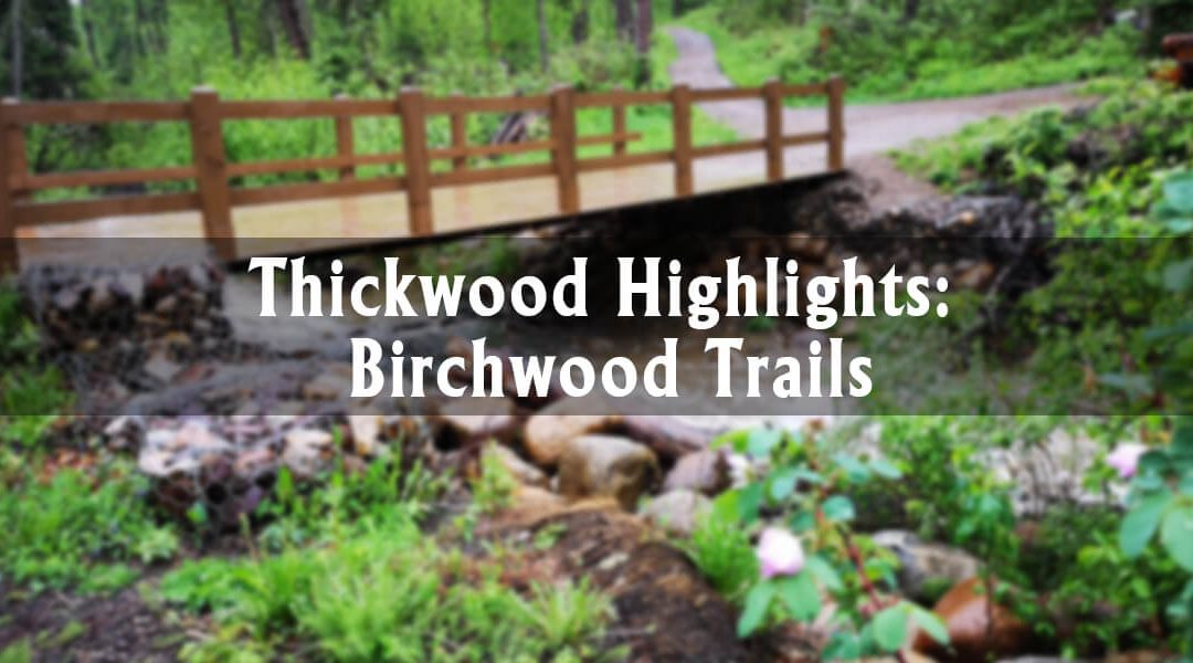 Thickwood Highlights: Birchwood Trails